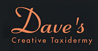 Dave's Creative Taxidermy